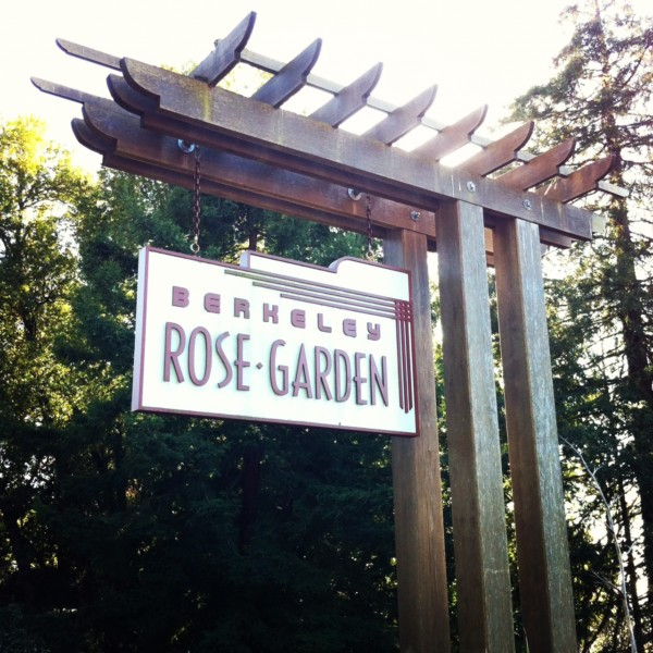 A Day at the Berkeley Rose Garden