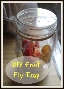 thumbnail for How to get rid of fruit flies in the home