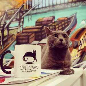 thumbnail for America's First Cat Cafe